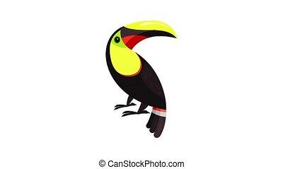 Toucan parrot icon animation