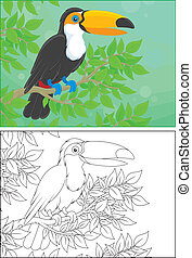 Toucan perched on a branch in jungle, color and black and...