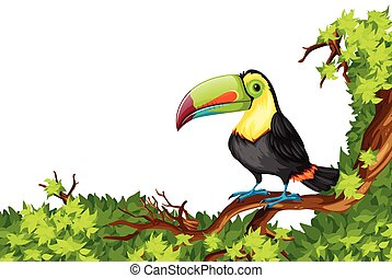 Toucan standing on branch