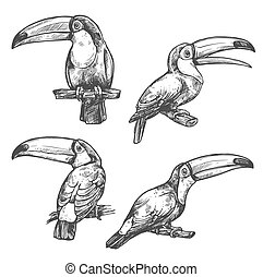 Toucan tropical bird sketch, exotic animal design - Toucan...