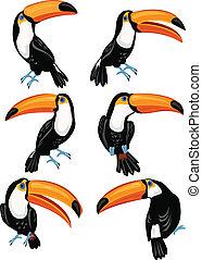 toucans, セット