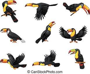 toucans, ensemble, dessin animé