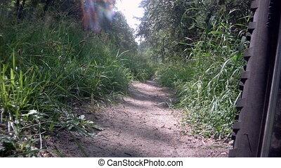 tour bicyclette, par, forêt