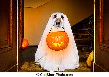 tour, chien, traiter, ou, halloween, fantôme