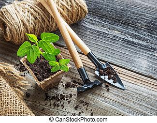 tourbe, pot, seedlings