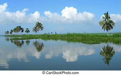 Tourism in Kerala India - Palm trees and rice fields on ...