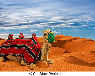 Tourist camel on sand dunes in the desert