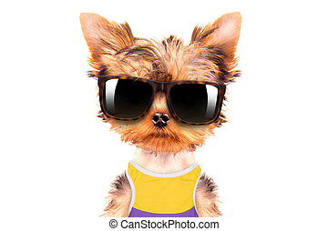 tourist dog with shades
