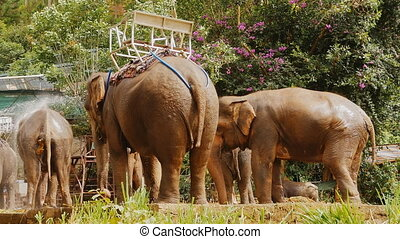 Tourist elephants in Vietnam pour water in hot weather.