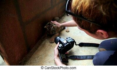 Tourist girl taking picture of baby tiger, bangkok, thailand