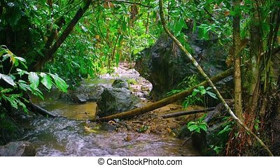 """Tourist Hiking along a Tropical Mountain Stream on a Rainy Day, with Sound"""