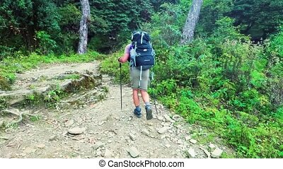 Tourist in the hike walks among the forest in Himalayas
