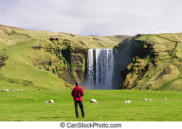 Tourist looks at the Skogafoss waterfall in Iceland