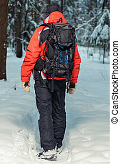 tourist on a hike in the winter forest, view from the back