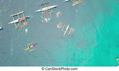 Tourist people swimming and snorkeling with wild whale shark while feeding in sea. Aerial view feeding while shark in open sea in natural reserve.