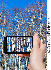 tourist photographs birch trees in spring day