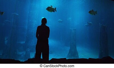 Tourist Stands Watching Enormous Fish at a Public Aquarium