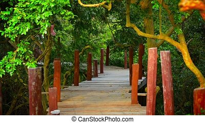 Video 1080p - Tourist strolls among the trees along an elevated wooden walkway constructed on stilts over the river in Cambodia, Asia.
