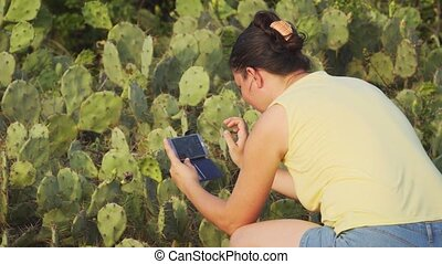 Foreign tourist takes several digital photos of a cluster of prickly pear cacti using her smart phone in Sri Lanka. UltraHD 4k video