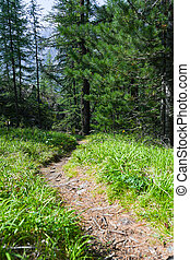 Tourist trail in coniferous forest. Hiking, summer travel on foot