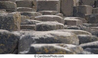 Tourist Walking On Giant Causeway, Northern Ireland - Native...