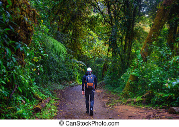 Tourist with a backpack walking through the jungle of Monteverde Cloud Forest in Costa Rica.