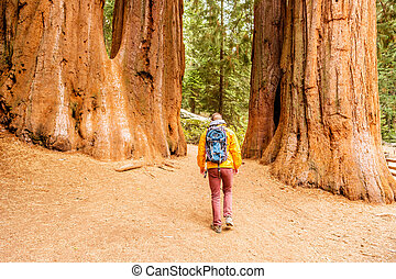 Tourist with backpack hiking in Sequoia National Park. ...