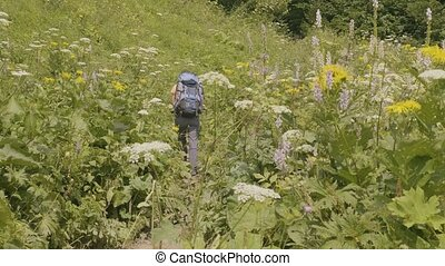 Tourist with backpack hiking on summer meadow and green forest background