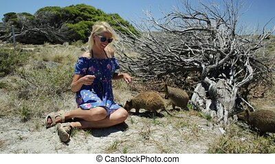 Tourist with three Quokka