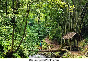 Tourist woman trekking in Bali jungle