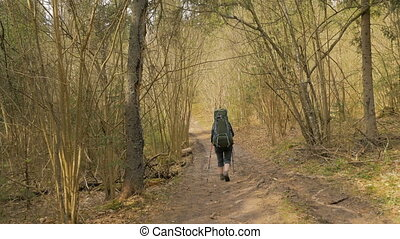 Tourist woman with backpack walking in the summer forest - flying shot
