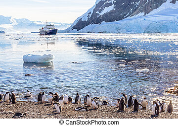 Touristic cruise ship in the antarctic lagoon among icebergs and Gentoo penguins colony on the  shore of Neco bay, Antarctica