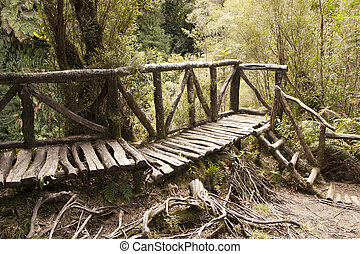 Touristic trail in a forest - wooden ladders and footpaths