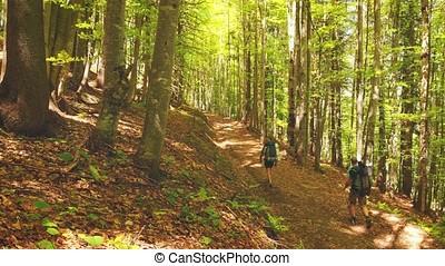 Tourists go through a fairytale green forest, Ukrainian...