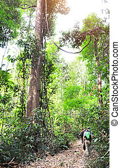 Tourists in rain forest during the dry season, Cambodia