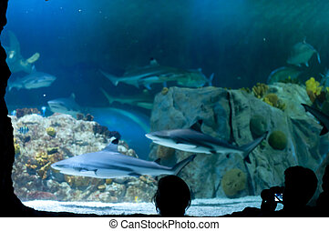 Tourists Photographing the fish at the Aquarium