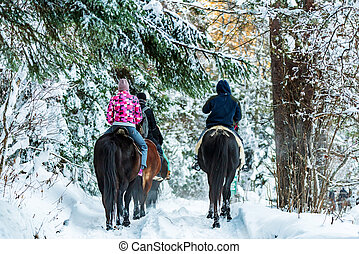 Tourists ride horses in winter forest back view