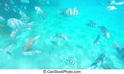 Tourists snorkeling with exotic fishes in the crystal clear waters of red sea israel