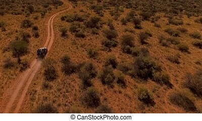 Tourists travel by car in the savannah of Namibia.