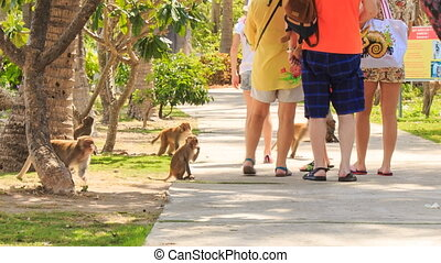 tourists walk in park monkeys run around ask for food -...