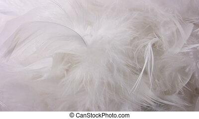tourner, plume, blanc