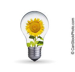 tournesol, ampoule, lumière