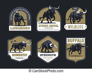 touros, buffalo.