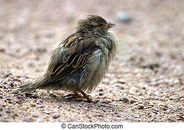 Image close-up of a sparrow