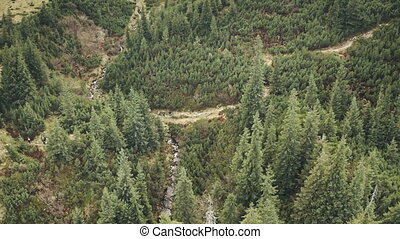 Toutists at mountain aerial. Nature landscape at green pine trees forest. Travelers at fir woodland hiking at path. Mountaineering lifestyle. People vacation at Carpathians mounts, Ukraine, Europe