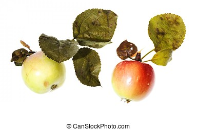 tow apples with droplet