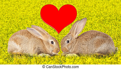 Tow cute rabbits in love on flowery field