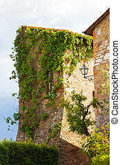 tower twined grapes, in the ancient town in Tuscany, Italy
