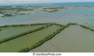 Town among the water in mangroves. - Town in cultivated...