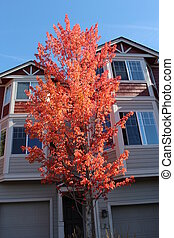Townhouse with Autumn Foliage